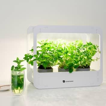 Station serre LED ISL-60025, ampoule pour plantes