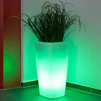 Dekolampe Trevia V LED RGBW, bepflanzbar weiß
