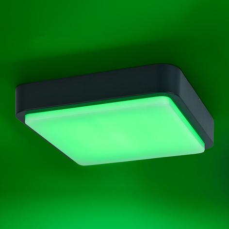 Paul Neuhaus Q-LENNY udendørs væglampe, antracit