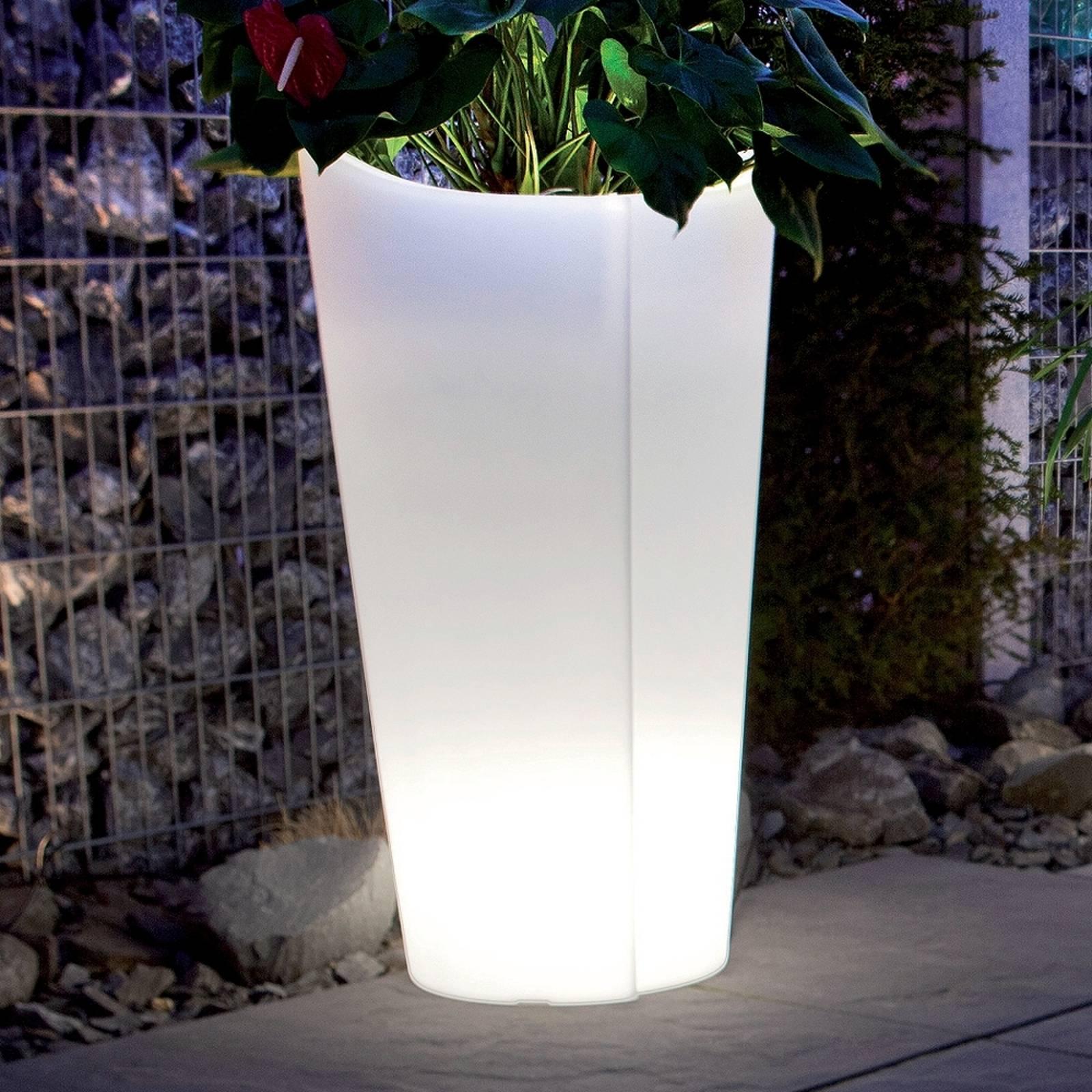 Vaso piante di qualità Tulpe, altezza 60 cm