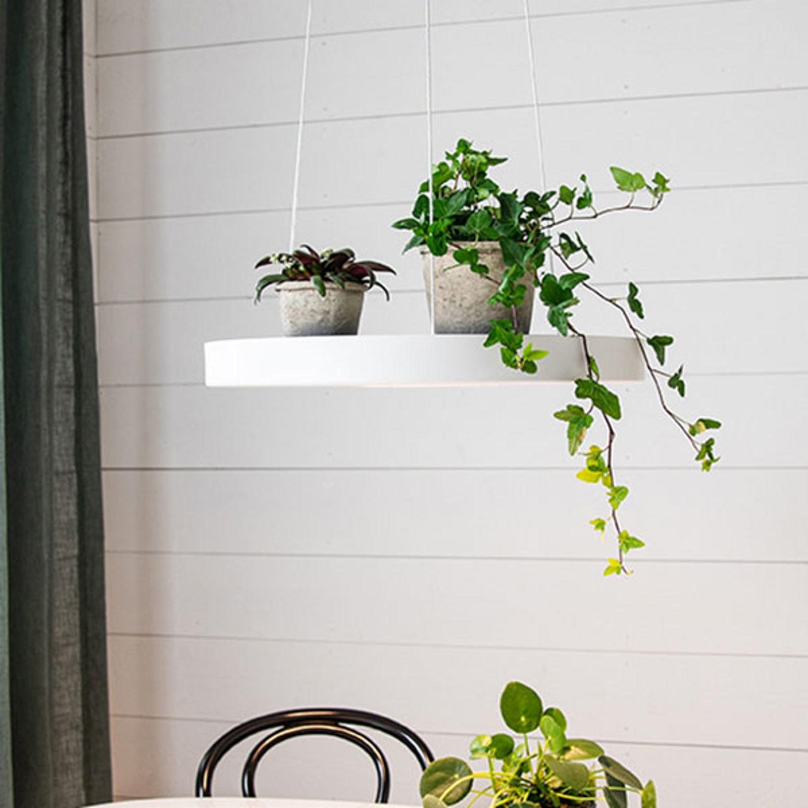 LED-Hängeleuchte Plate, weiß