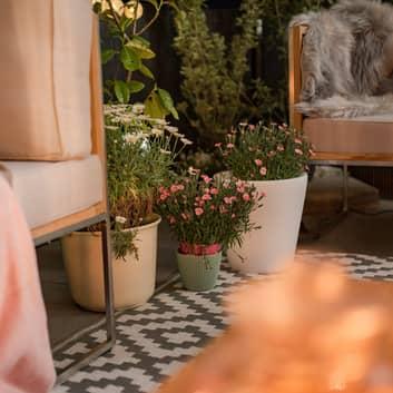 Assisi LED-blomsterpotte, belyst