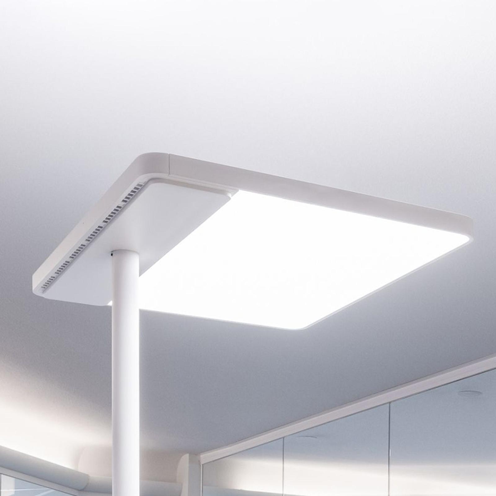 Lampa stojąca biurowa LED Linea-F, ściemniacz