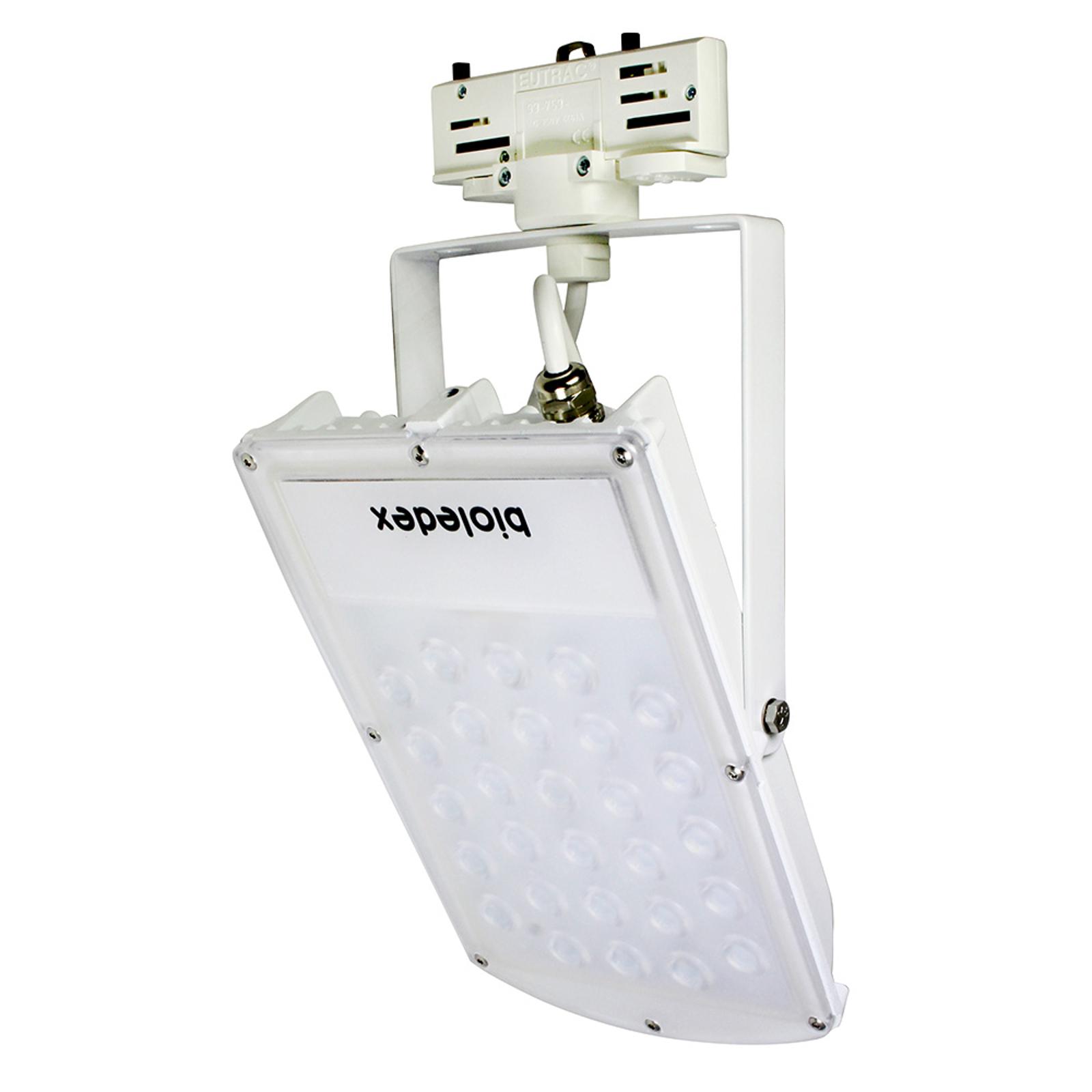 LED-Strahler Astir 3-Phasen 70° weiß 30W 3.000K