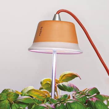 Lampada Chlorophyll per piante da appartamento
