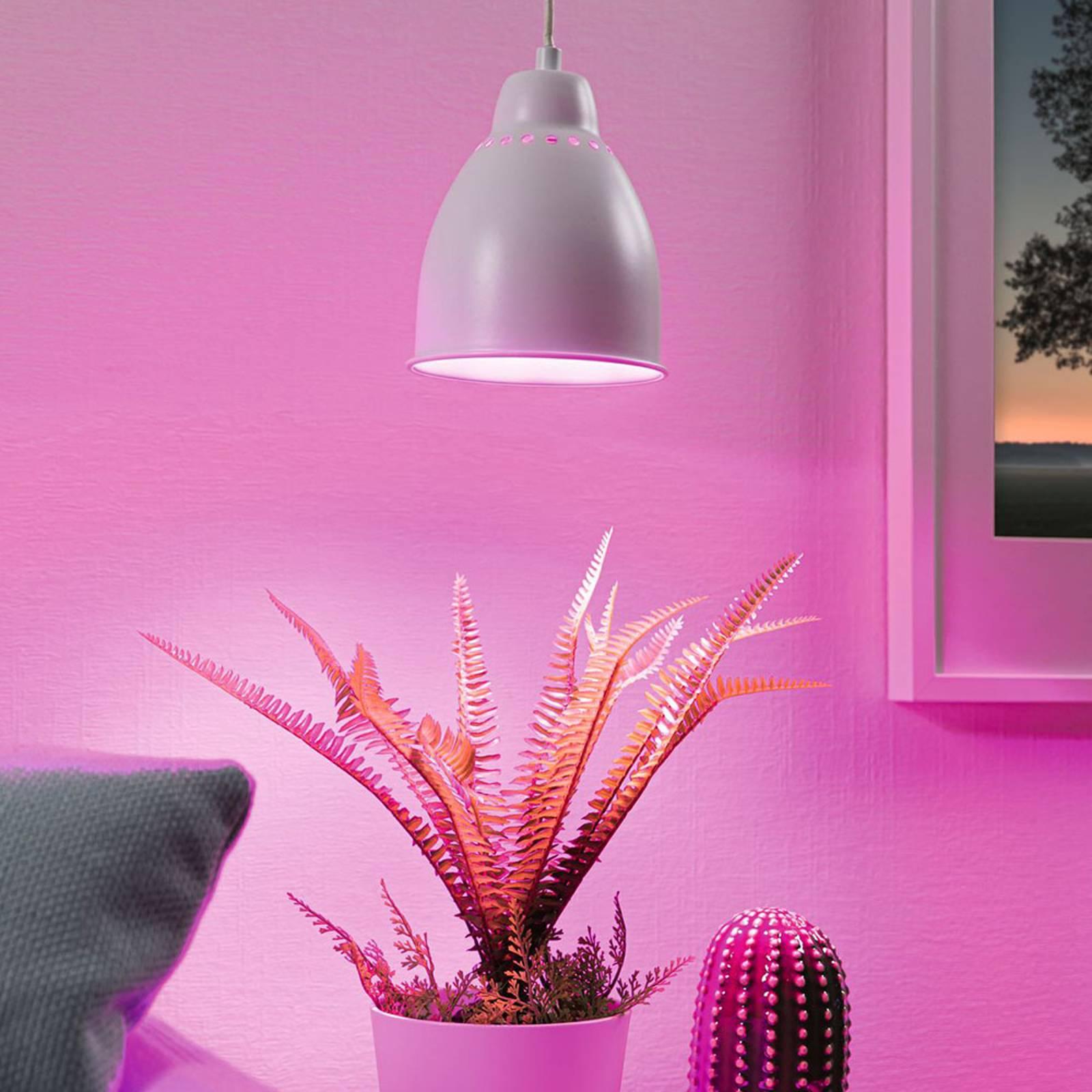 Paulmann Neordic Hilla hanglamp, wit