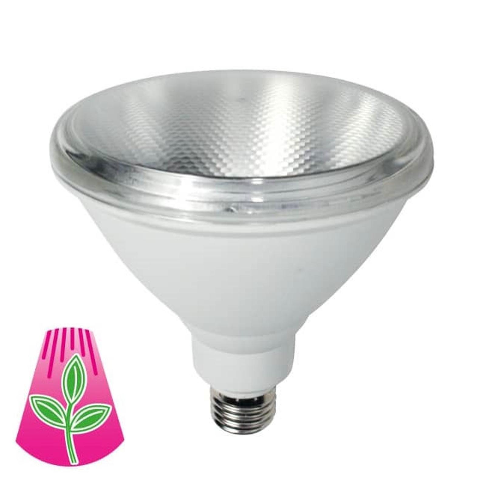 LED-Pflanzenlampe E27 PAR38 10W Vollspektrum