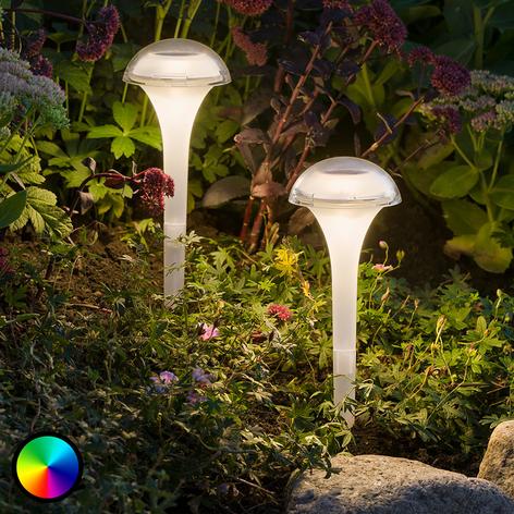 Färgrik LED-solarlampa Assisi med jordankare