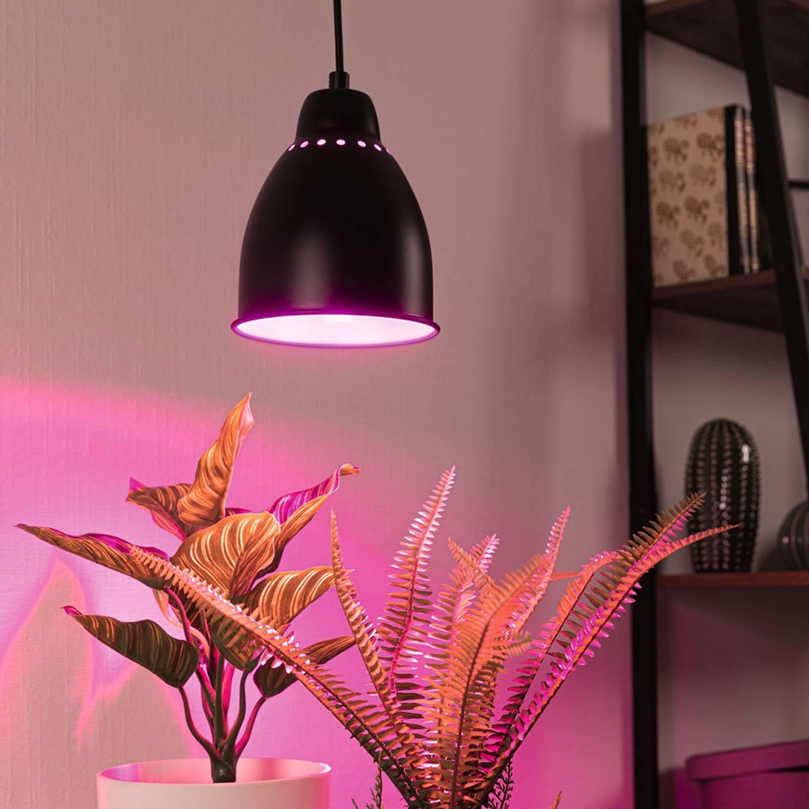 Paulmann Neordic Hilla hanglamp, zwart