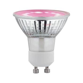 Paulmann -LED-kasvilamppu GU10 Grow Green 3,5W