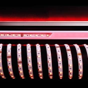 Tira LED flexible 484 nm 60 W 500x1x0,3 cm